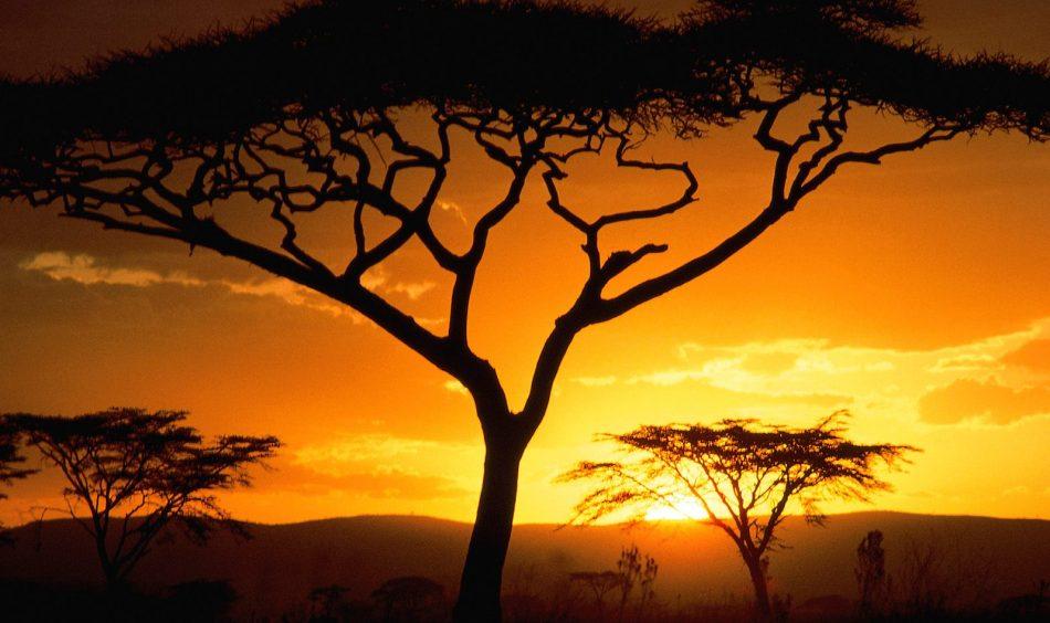 Kratkoe soderjanie top_5 knig pro Afriku