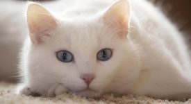 Кливленд Эмори «Кот на Рождество» читать онлайн