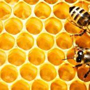 Майя Лунде «История пчел» читать онлайн