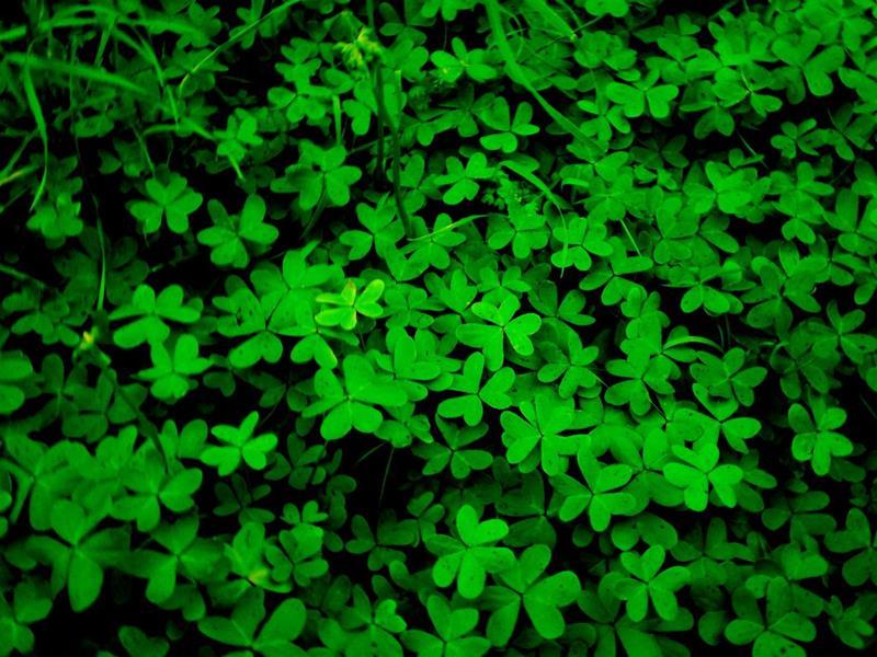 Мишель Пастуро «Зеленый. История цвета» читать онлайн