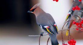 Киоко Мори «Одинокая птица» читать онлайн