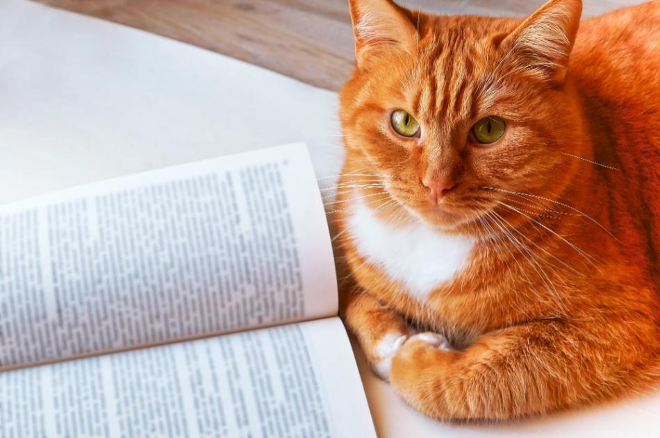 Гофман «Житейские воззрения кота Мурра» читать онлайн