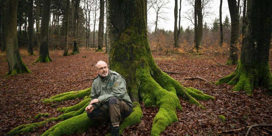 Петер Вольлебен «Тайная жизнь деревьев» читать онлайн